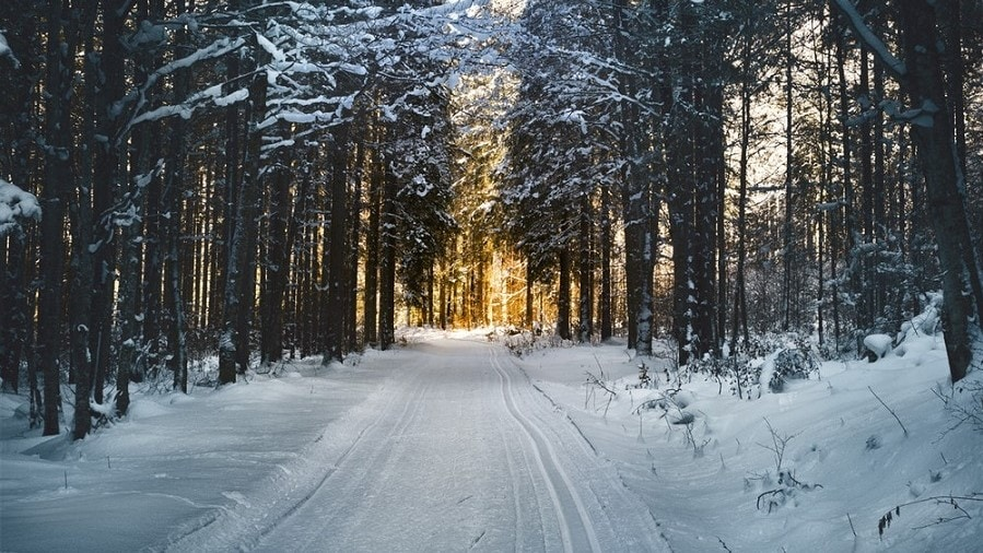 a snowy street leading through the woods