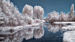 a frozen lake with snowy trees and a clear blue sky