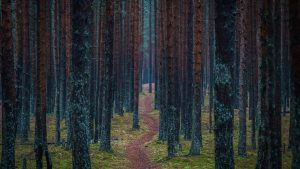 a small path leading through dark woods