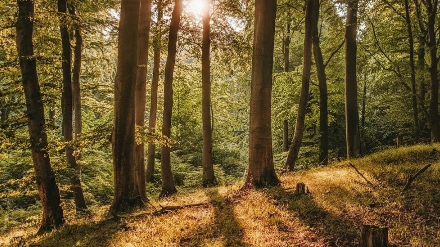 a pictures of trees with the sun shining
