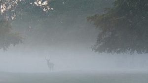 a picture of a deer in the fog
