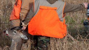 hunters pulling a dead deer