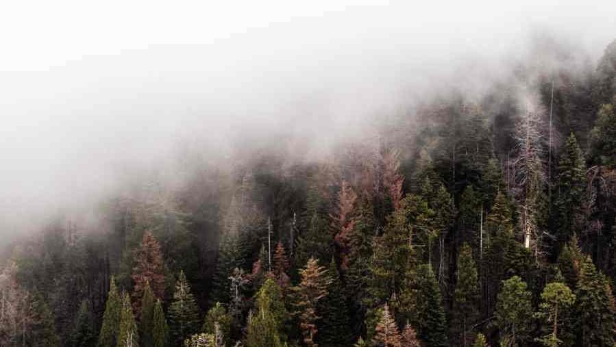 misty mountain woods