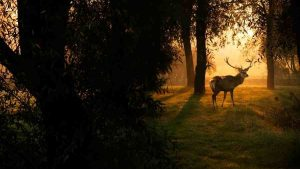 sundown in the woods and a deer walking by