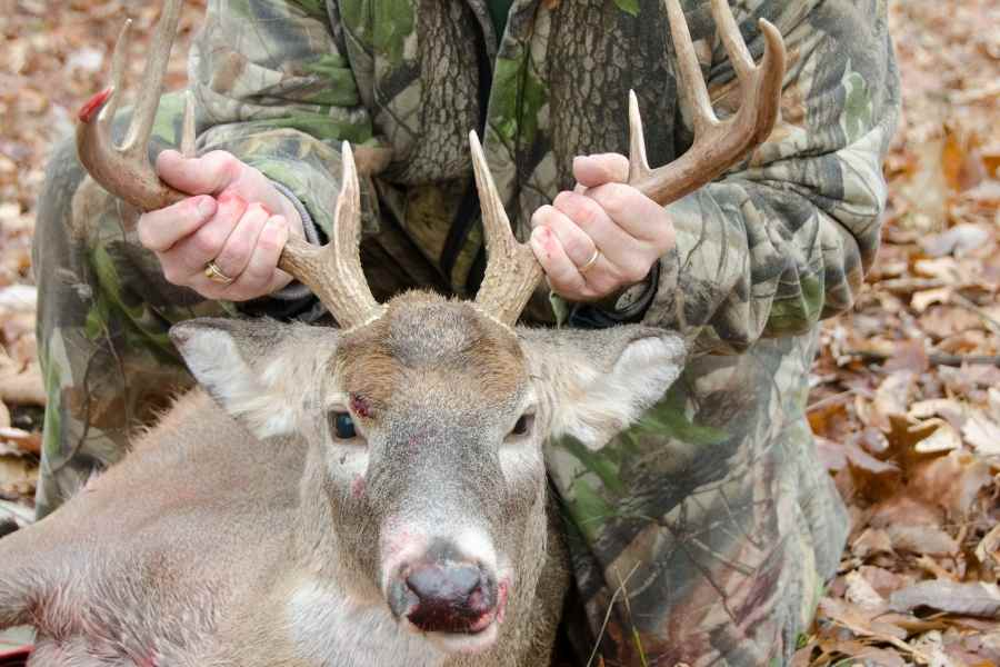 bow hunter holds head of deer by antlers after harvesting