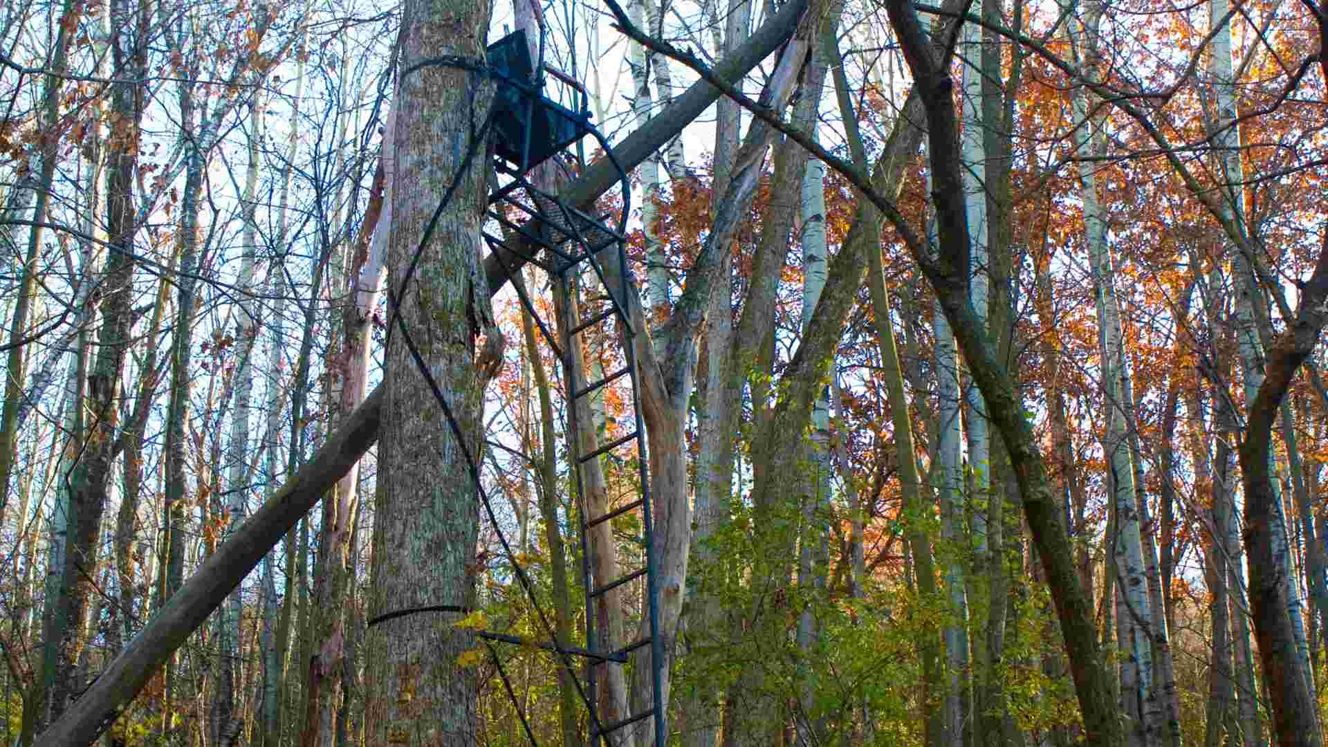 hunting land and a ladder treestand (2)